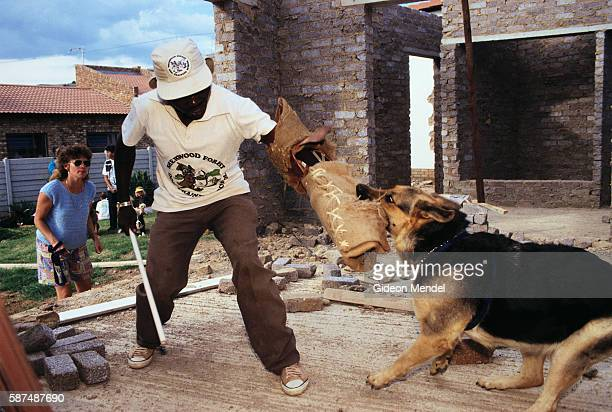 Animal trainers at Sherwood Forest Dog Training School in Johannesburg South Africa training fierce guard dogs With increasing fears about security...