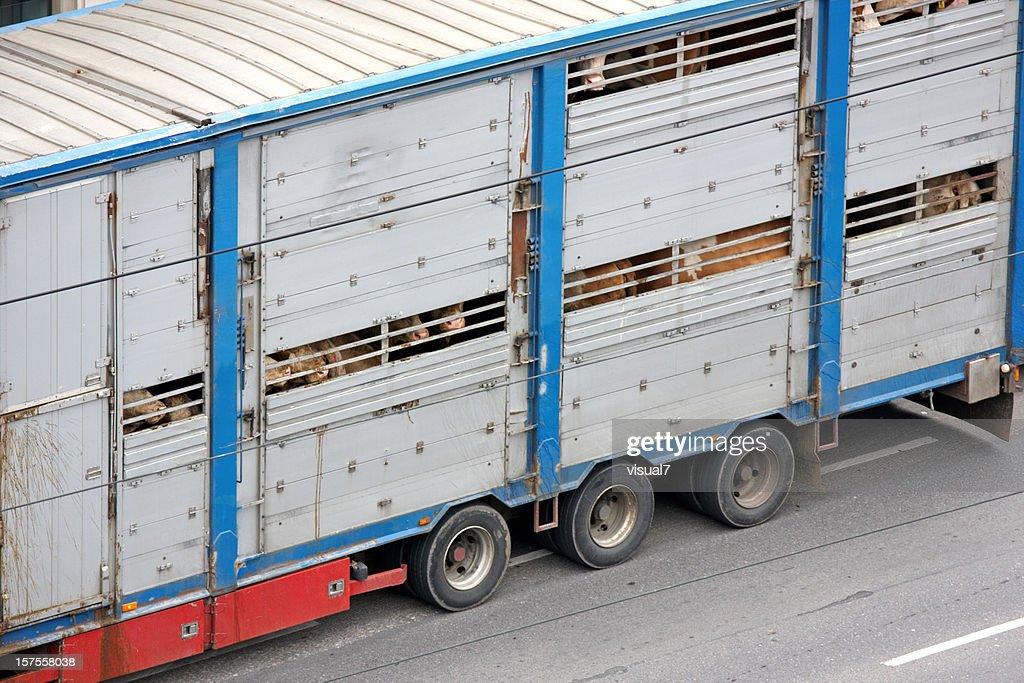 animal transportation : Stockfoto