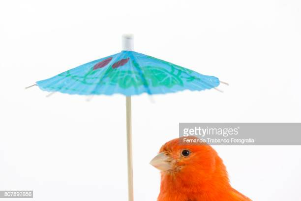 Animal with an umbrella