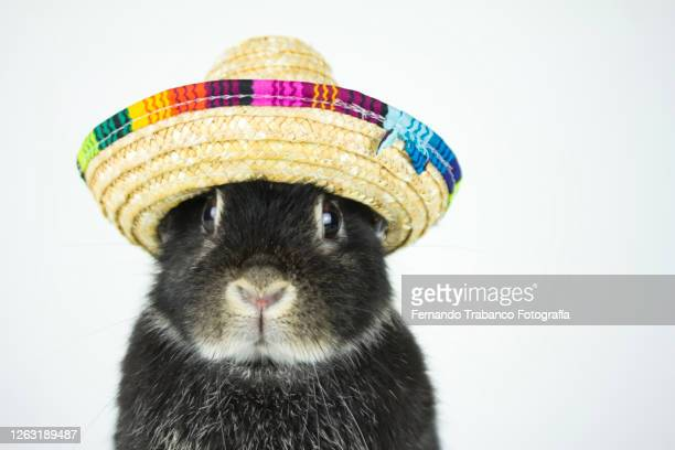 animal with hat - rabbit animal stock pictures, royalty-free photos & images