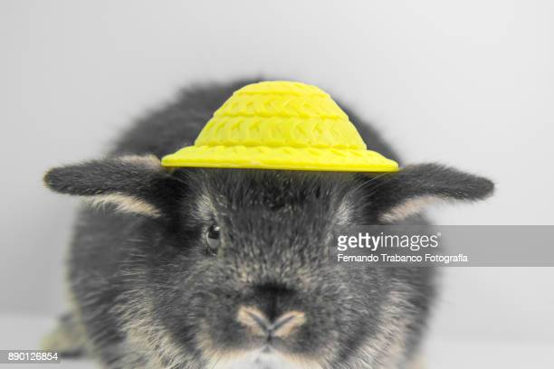 Animal with hat