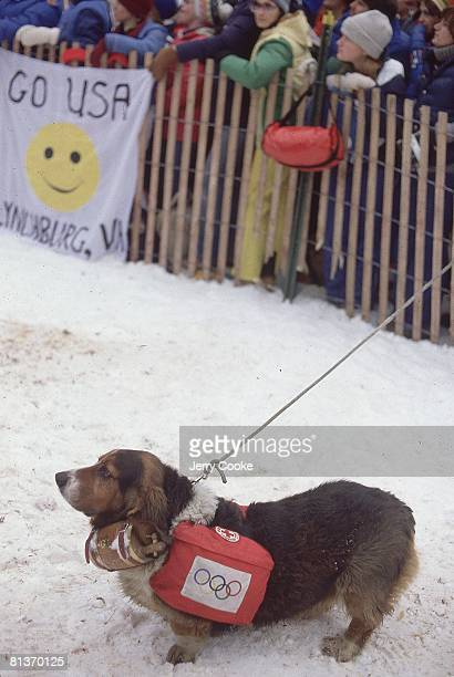Animals 1980 Winter Olympics View of Basset hound dog carrying cask during skiing event Lake Placid NY 2/13/19802/24/1980