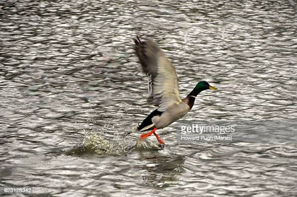 Animals and Aquatic life of Richmond Park, London