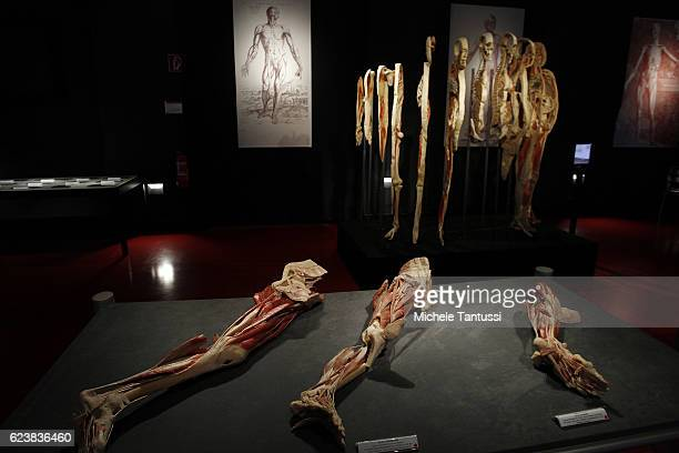 Animals and Human bodies are displayed during the 10th anniversary celebration of Gubener Plastinate GmbH, the plastination institute Gunther von...