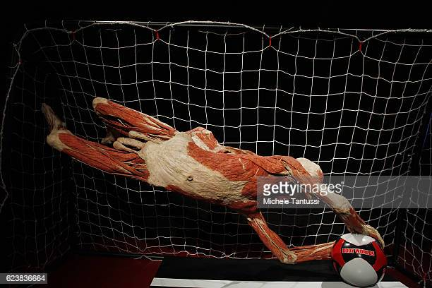 Animals and Human bodies are displayed during the 10th anniversary celebration of Gubener Plastinate GmbH the plastination institute Gunther von...