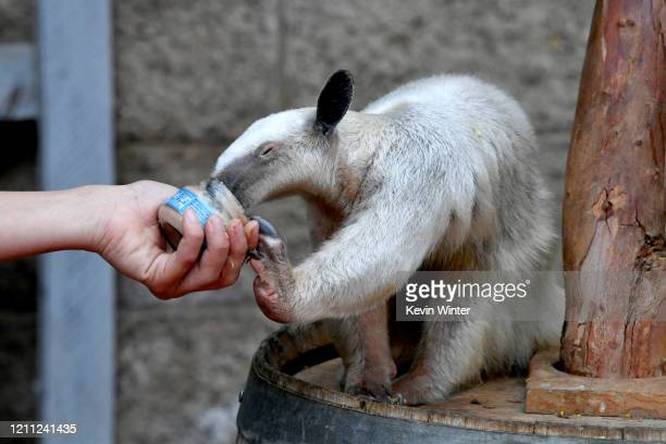 """Animals are seen at """"Meet Me In Australia"""" To Benefit Australia Wildfire Relief Efforts, hosted by The Greater Los Angeles Zoo Association, at Los..."""