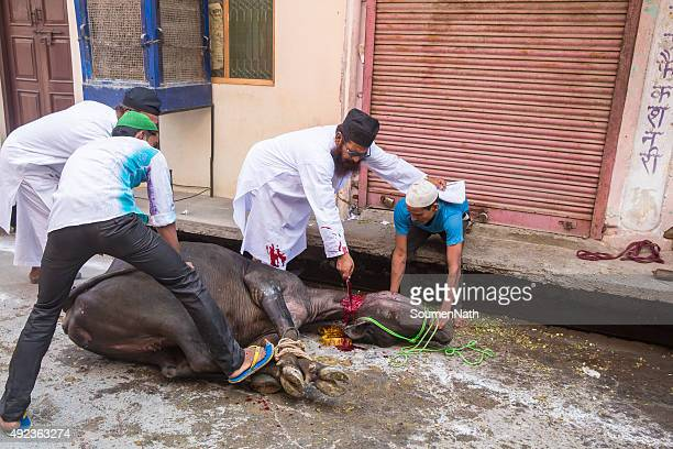 tiere geopfert, mark eid-ul-adha. - eid al adha stock-fotos und bilder