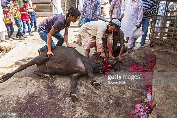 animals being sacrificed to mark eid ul-adha. - eid al adha stock pictures, royalty-free photos & images