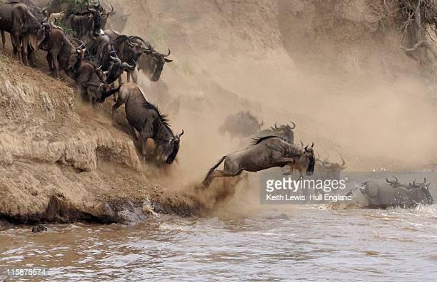 Animals crossing over Mara River