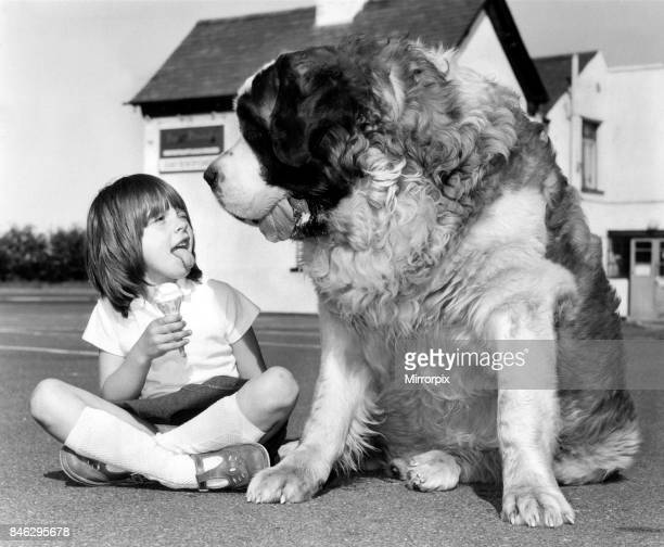 Animals Dogs Jason the St Bernard May 1980 Jason the St Bernard is a contender for the Heaviest Dog in Britain His owners six year old grandaughter...