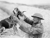 Animals during the first world war a sergeant of a royal engineers picture id154419631?s=170x170
