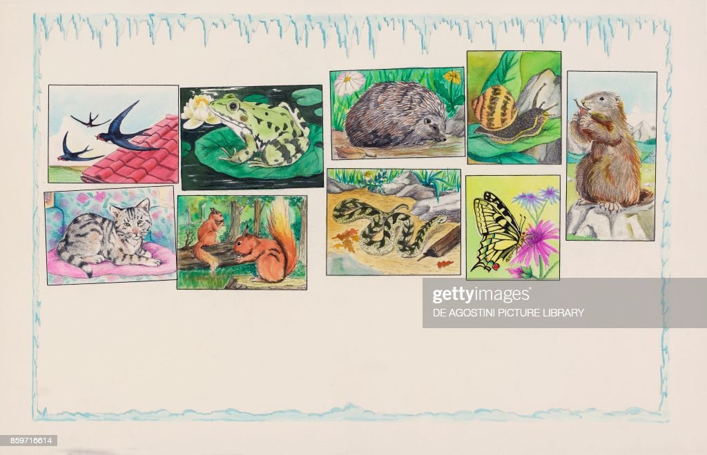 Animals from top left: swallows, frog, porcupine, snail, marmot; below, cat squirrels, snake, butterfly, children's illustration, drawing : News Photo