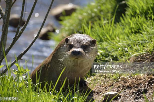 animals image - czech hunters stock pictures, royalty-free photos & images