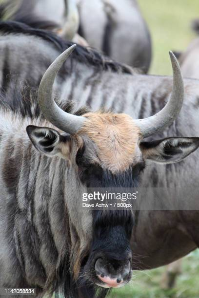 animals image - dave ashwin stock pictures, royalty-free photos & images