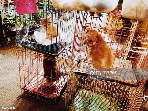 Animals In Cage At Pet Shop