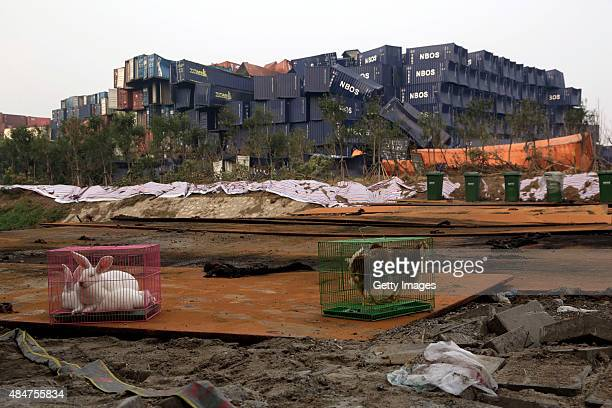 Animals in cages are put at the blast scene to detect danger near the Tianjin Binhai explosion site on August 21 2015 in Tianjin China Tianjin...