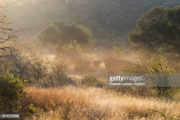 animals in forest during foggy weather - gauteng province stock pictures, royalty-free photos & images