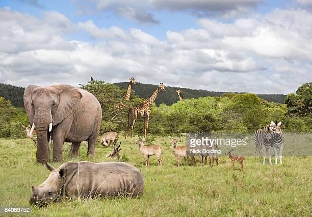 animals in safari park - großwild stock-fotos und bilder