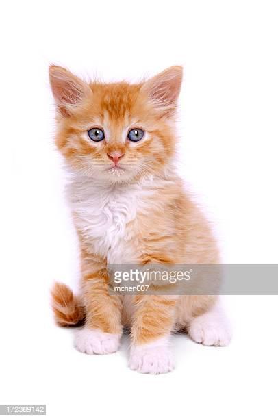 Animals : Isolated Kitten