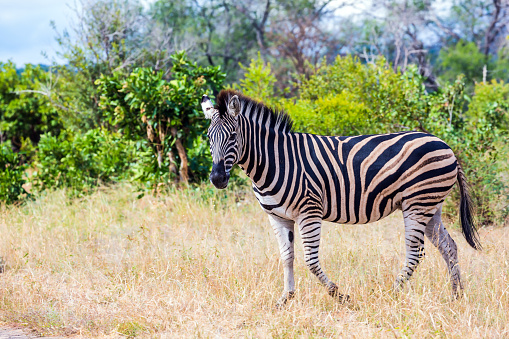 Animals live freely in the savannah 1223988615