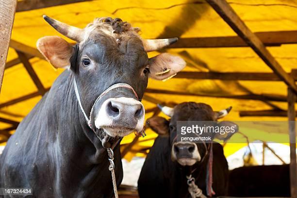 動物のスタイル - 食肉処理場 ストックフォトと画像