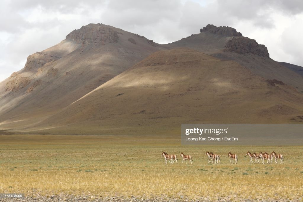 Animals On Field Against Mountains And Sky : Photo