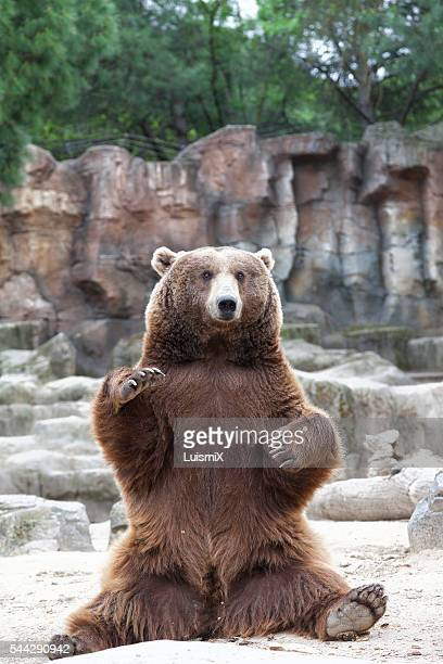 animals - bear stock pictures, royalty-free photos & images