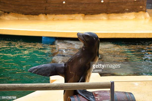 animals - foca imagens e fotografias de stock