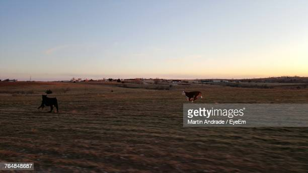 Animals Running On Field Against Sky During Sunset