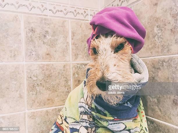Animals Taking a Bath