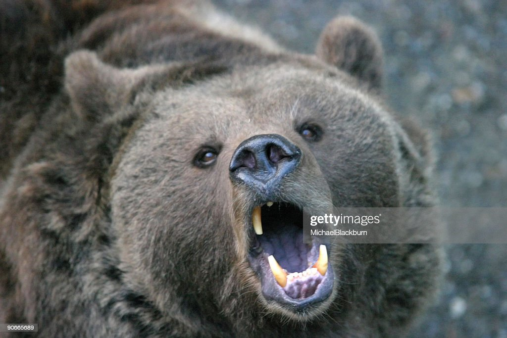 Animals - Too close for comfort #3 : Stock Photo