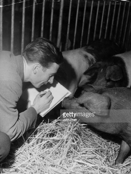 Animator Eddie Radage busy sketching pigs on a farm in Hertfordshire in preparation for his work on an animated film of George Orwell's book 'Animal...