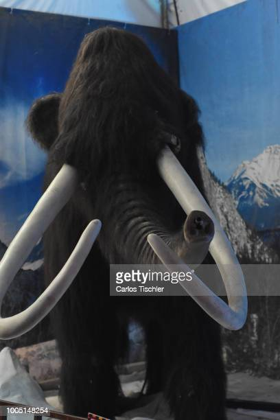 A animatronic of Mammoth looks during a tour as part of the exhibition 'Dinasaurios Animatronicos' at Parque Naucalli on July 21 2018 in Naucalpan de...