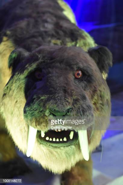 A animatronic of Sabertooth looks during a tour as part of the exhibition 'Dinasaurios Animatronicos' at Parque Naucalli on July 21 2018 in Naucalpan...