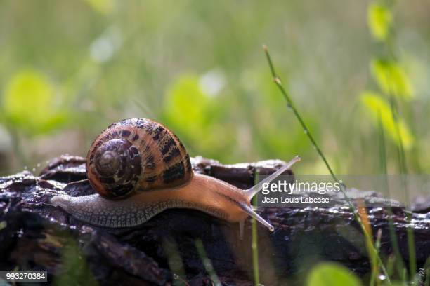 Animaux - Escargot - Animal - Snail