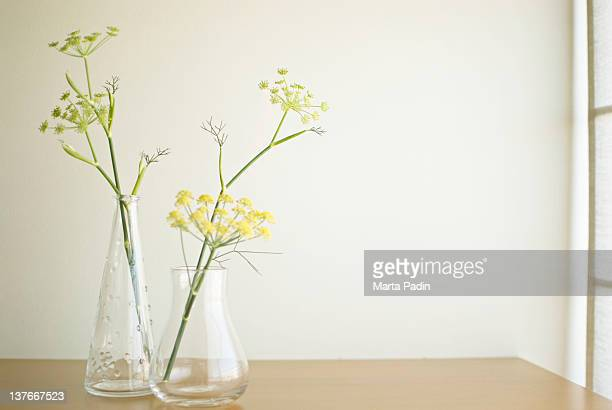 Aniseed flower in vase