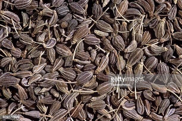 Aniseed Pimpinella anisum