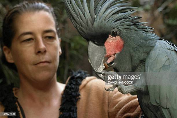 """Anita Barz holds a rare Palm Cockatoo as he cracks open a Macadamia nut at the Adelaide Zoo, 25 January 2004. """"Ben"""" whose diet includes some of the..."""