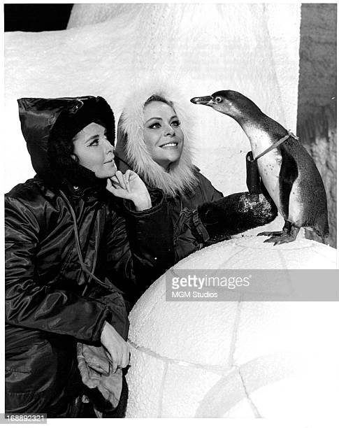 Anjanette Comer and Janine Gray pet a penguin on set of the film 'Quick Before It Melts' 1964