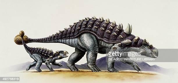 Ankylosaurus magniventris Ankylosauridae Cretaceous Illustration