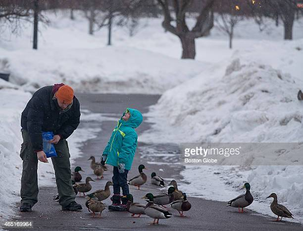 Anna Marek with her dad Arthur Marek of Boston feeding peanuts to the ducks and squirls during a light snow fall in the Boston Public Garden on...