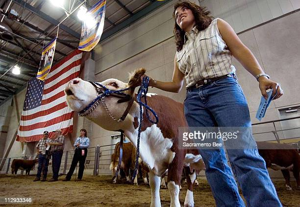 Anna Marie dos Remedios holds her 'mooing' miniature Hereford cow just prior to show competition at the California State Fair at Cal Expo in...