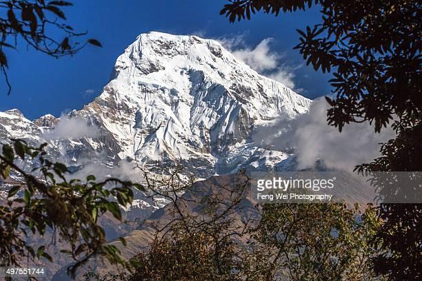 annapurna south, tadapani, annapurna region, nepal - annapurna south stock photos and pictures