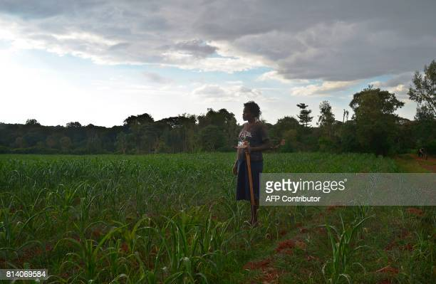 Anne Njoki stands on a tilled piece of land outside her home village in Kamwenje Laikipia west that is adjascent to a wooded area of the Laikipia...