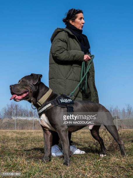 Annette Rost, spokesperson for the Tierheim Berlin animal shelter, holds an American Staffordshire Terrier Mix called Marti, as she speaks to...