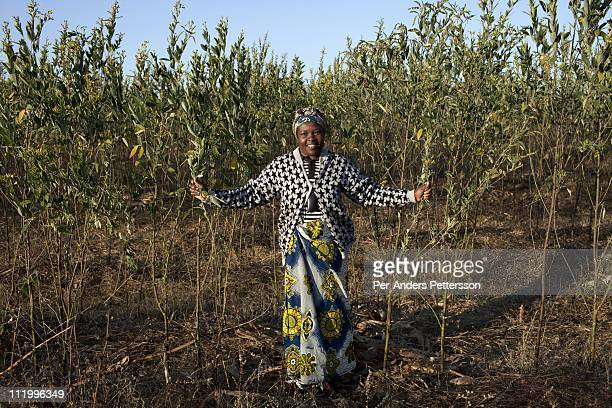 Annie Cuputa and a farmer grows trees to be used for Cook stoves supplied by Clean Development Mechanism on June 17 in Lusaka Zambia She walks in her...