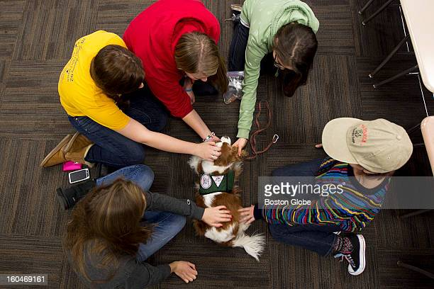 Annie Oakley a therapy dog from Dog BONES center is petted by BU freshmen students clockwise from bottom left Julianne DePaoli Hayley McNutt Taylor...