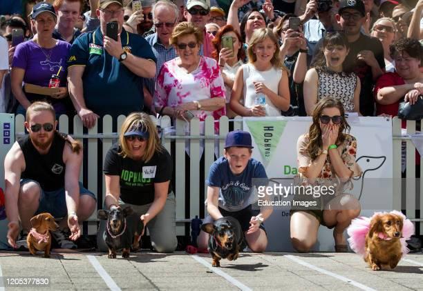 Annual dachshund races in Melbourne raise funds for Dachshund Rescue Australia
