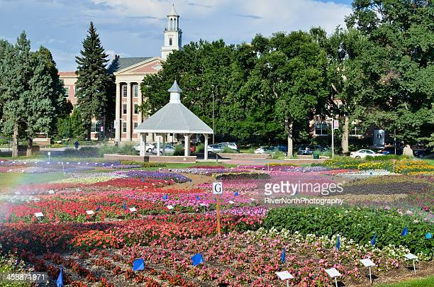 annual flower trial garden, fort collins - fort collins stock pictures, royalty-free photos & images