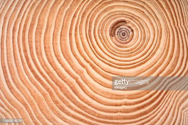 annual rings of tree trunk slice - wachstum stock-fotos und bilder